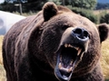 А если пригодится? Как вести себя при встрече с медведем