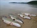 Успей узнать: Лучшие рыболовы мира поделились секретами  суперклева