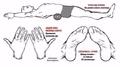 Японский секрет: как убрать пивной живот и выпрямить спину за неделю
