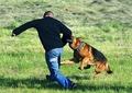 Советы спецов: как спастись от нападения злой собаки