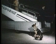 Пронзительная история собаки, брошенной хозяином в аэропорту