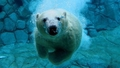 Надолго задержать дыхание под водой и не умереть