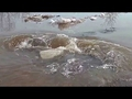 Как выплыть из воронки в реке