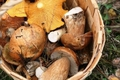 Какие грибы едят сырыми