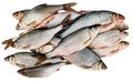 Как засолить рыбу для сушки или вяления мокрым способом