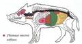 Меры предосторожности при охоте на кабана